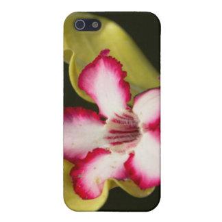 Desert-Rose (Adenium Obesum), South Africa iPhone 5 Cases