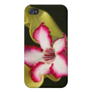 Desert-Rose (Adenium Obesum), South Africa iPhone 4/4S Cases