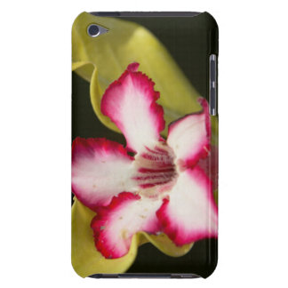 Desert-Rose (Adenium Obesum), South Africa iPod Touch Case