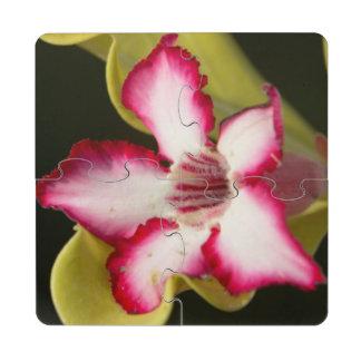 Desert-Rose (Adenium Obesum), South Africa Puzzle Coaster