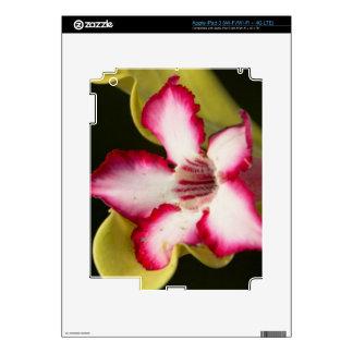 Desert-Rose (Adenium Obesum), South Africa iPad 3 Skins