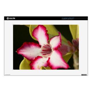 """Desert-Rose (Adenium Obesum), South Africa Skins For 15"""" Laptops"""
