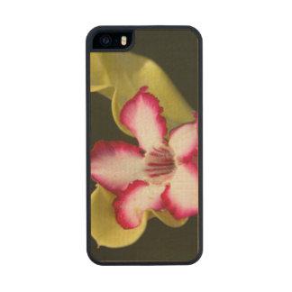 Desert-Rose (Adenium Obesum), South Africa Carved® Maple iPhone 5 Slim Case