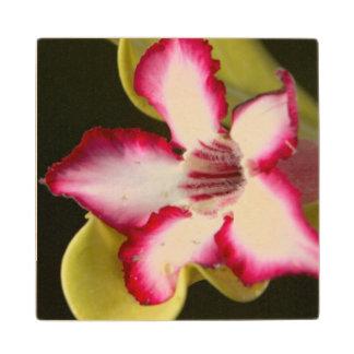 Desert-Rose (Adenium Obesum), South Africa Wood Coaster
