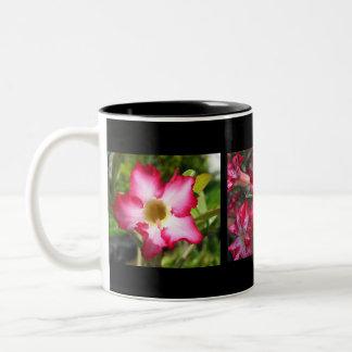 Desert Rose Adeniums on Mug