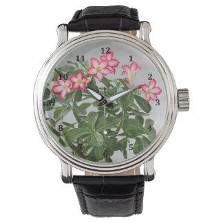 Desert Rose Flowers Plant Watch