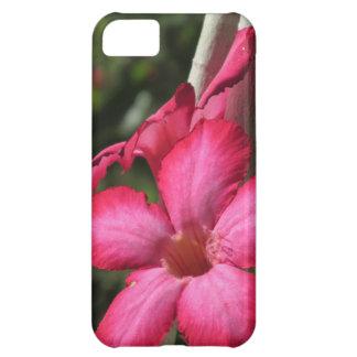 Desert Rose iPhone 5 Case