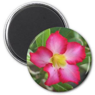 Desert Rose Magnet