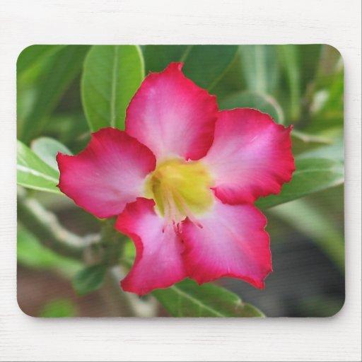 Desert Rose Mousepad