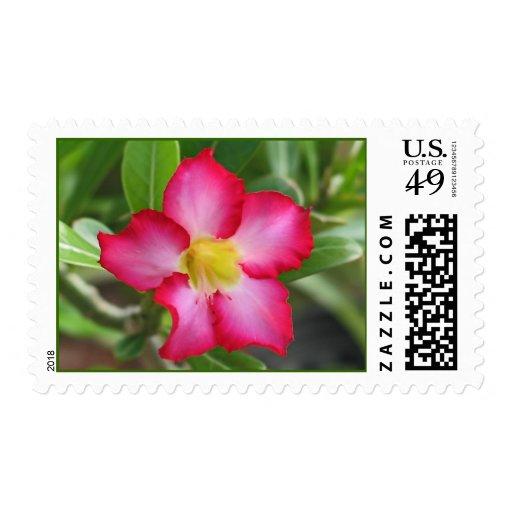 Desert Rose Postage Stamp