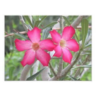 Desert Roses Photo Print