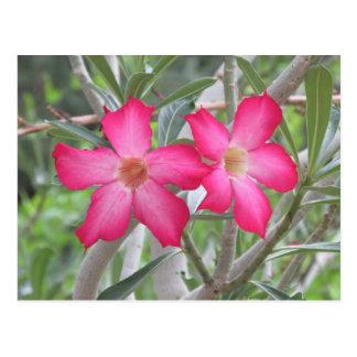 Desert Roses Postcard