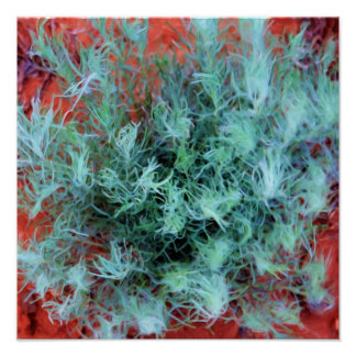 Desert Sage Print