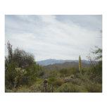 Desert Scenery Art Photo