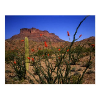 Desert Scenery Postcard