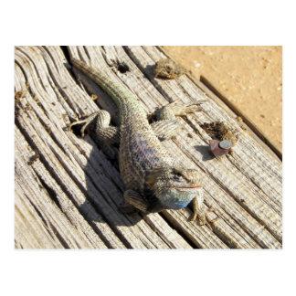 Desert Spiny Lizard Postcards