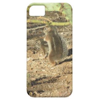 Desert Squirrels in Tucson iPhone 5 Case