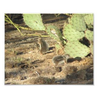 Desert Squirrels in Tucson Photo Print