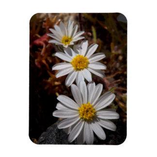 Desert Star Wildflowers Magnet