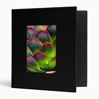 Desert Succulent in Bright Sun and Shade 3 Ring Binder