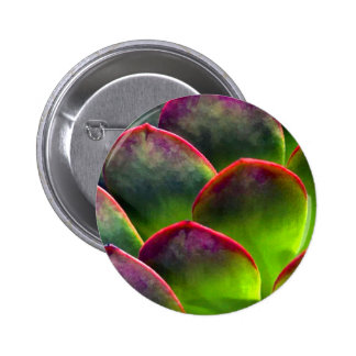 Desert Succulent in Bright Sun and Shade Pinback Button