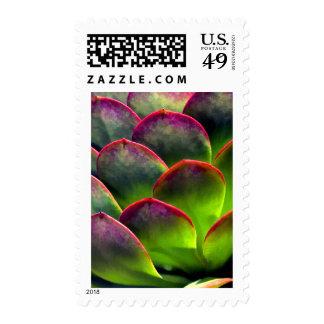 Desert Succulent in Bright Sun & Shade Postage Stamp