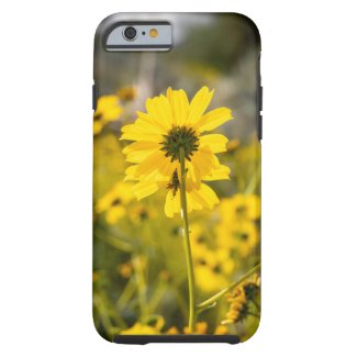 Desert Sunflower Phone Case