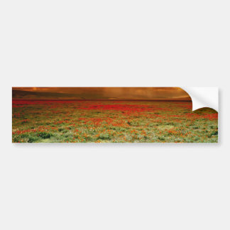 Desert sunset on a field of California poppies, U. Bumper Sticker