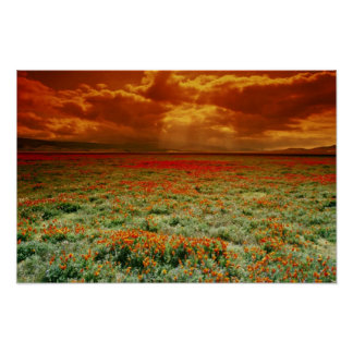 Desert sunset on a field of California poppies, U. Poster