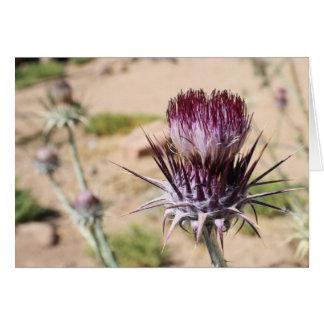 Desert Thistle Card 2