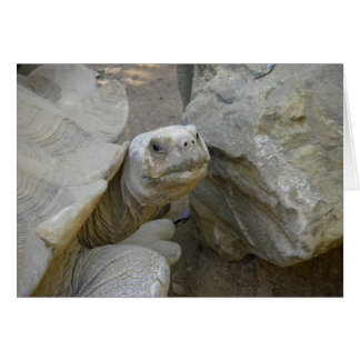 Desert Tortoise Close-Up Card
