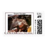 Desert Tortoise Postage Stamp