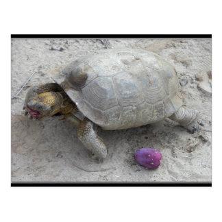 Desert Tortoise Postcard