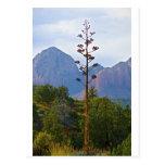 Desert trails Sedona Century plant Postcard