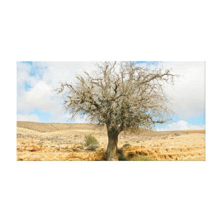 Desert tree surviving the heat canvas print