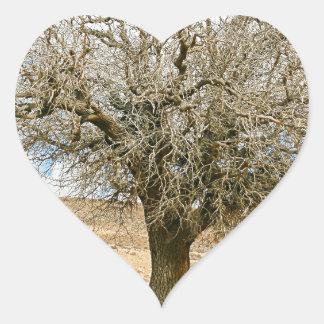 Desert tree surviving the heat heart sticker