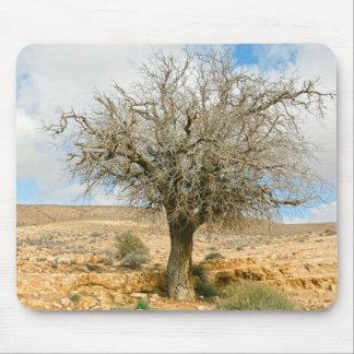 Desert tree surviving the heat mouse pad
