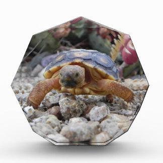 Desert Turtle Acrylic Award