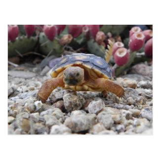 Desert Turtle Postcard