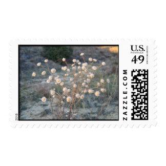 Desert Wild Flowers Stamps