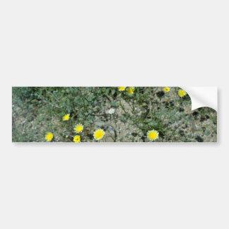Desert Wildflowers flowers Car Bumper Sticker