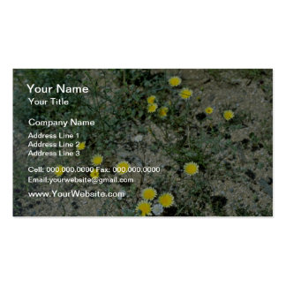 Desert Wildflowers flowers Double-Sided Standard Business Cards (Pack Of 100)