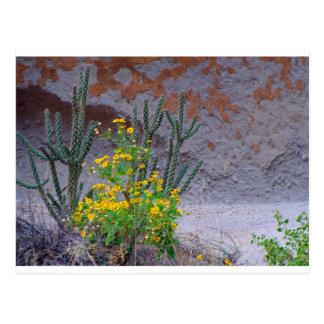 Desert Wildflowers Postcard