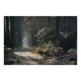 deserted path in the woods poster