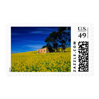 Deserted Shack In Canola Fields, Caledon Postage