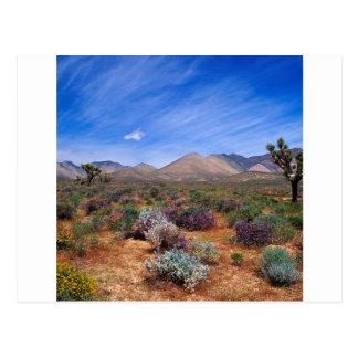 Deserts Bloom Conservation Area Postcard