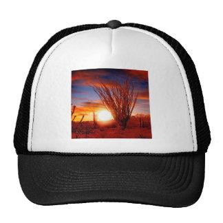 Deserts Ocotillo Sonora Arizona Mesh Hat