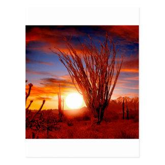 Deserts Ocotillo Sonora Arizona Postcard