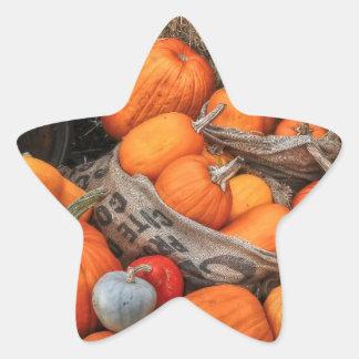 Desfile de la calabaza calcomanías forma de estrella personalizadas