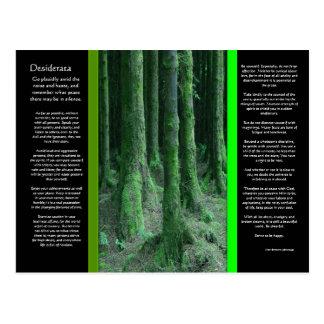 DESIDERATA Dark Mossy Forest Postcard